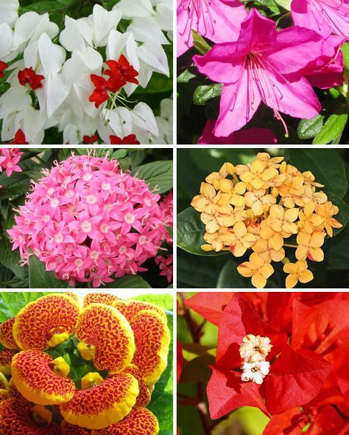 Virágok nevei